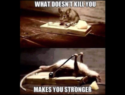 What Doesn't Kill You Makes You Stronger สำนวนภาษาอังกฤษ