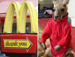 Woman kicked out of McDonald's for bringing a pet kangaroo Langhub.com เรียนภาษาอังกฤษจากข่าว